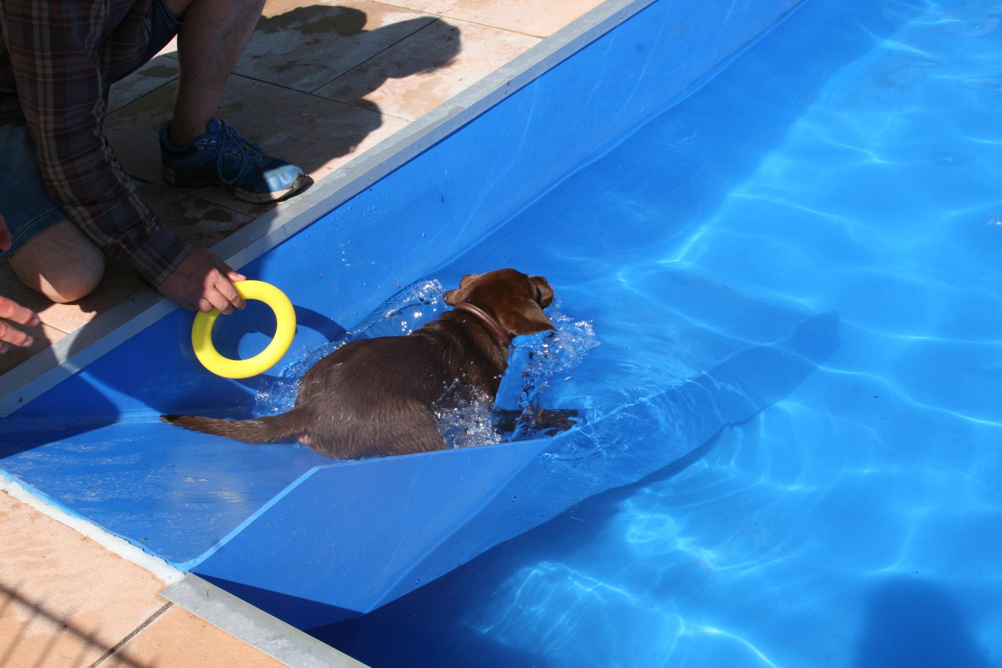 Unser Hundeschwimmbad Ist 6 X 3 Meter Lang Und Ca. 1 M Tief. So Können Sie  Bequem Neben Ihrem Hund Laufen, Während Dieser Das Kühle Nass Genießt.
